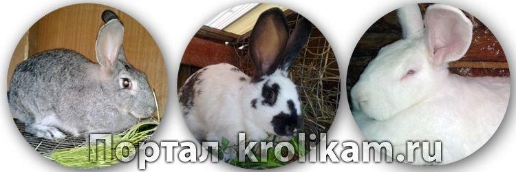 Сайт о кроликах krolikam.ru